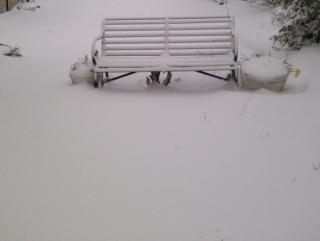 Snow jersey garden - cropped